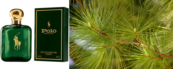 50 Cent perfume Polo