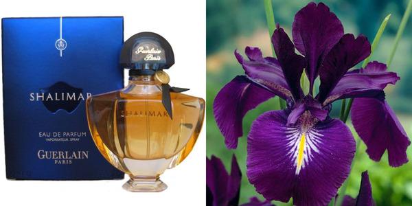Meryl Streep perfume Shalimar