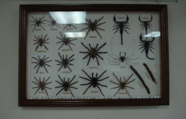 Claudia Schiffer collection of spiders